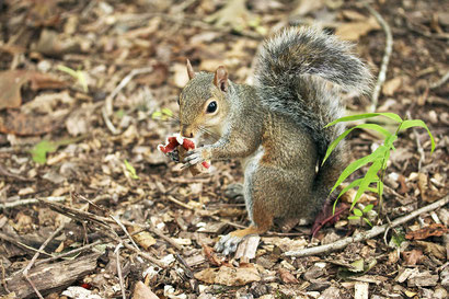Eichhörnchen trinken kein Alkohol