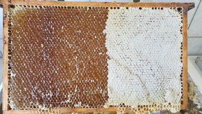 Hier wird Honig zum Schleudern vorbereitet.