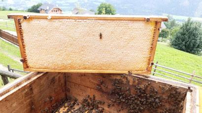 Auf solche Honigrähmchen haben viele Imker schon länger warten müssen