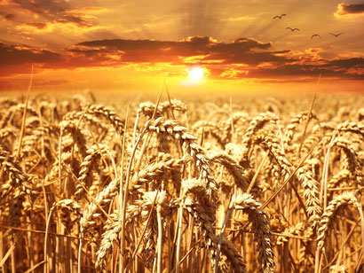Pseudogetreide, Weizen, Dinkel, Roggen, Buchweizen, Quinoa, Amarant, Abnehmen Gilching, Hypnosetherapie Gilching, Hypnosetherapeut Gilching