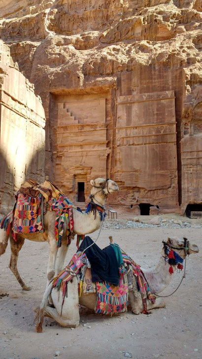 Photogenic camels at the Petra ruins, Jordan. Dante Harker