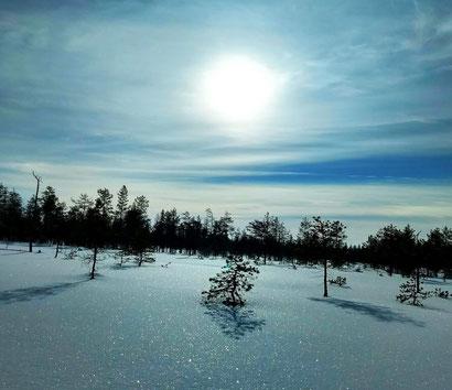Lapland in winter - Dante Harker