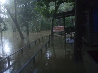 Flooded Uncle Tans Borneo - Dante Harker