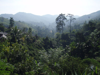 The jungles in Thailand