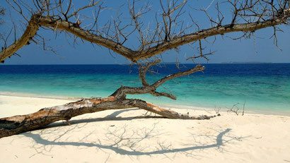Everywhere you look in the Maldives is an image ready for a screen-saver. Dante Harker