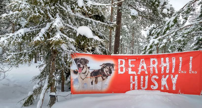 Bear Hill Husky - Dante Harker