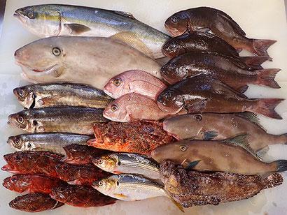 宅配寿司 寿司の出前 天然地魚