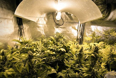 Positionierung der Lampen und Pflanzen