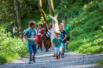 Trekking with alpacas in Zell am See-Kaprun