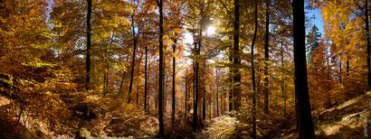 Herbstwald an der Kuhkolksklippe_1