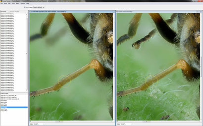 Zerene: Das Ergebnis eines Teil-Stacks auf der linken Seite zeigt die korrekte Verrechnung des Beines vor unscharfem Hintergrund. Mit diesem Bild lassen sich die durchsichtigen Beine des Gesamt-Stacks reparieren.