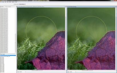 Zerene: Lichtschwankungen im unscharfen Hintergrund erzeugen vor allem bei der zweiten Methode DMAP (rechts im Bild) Fehler.