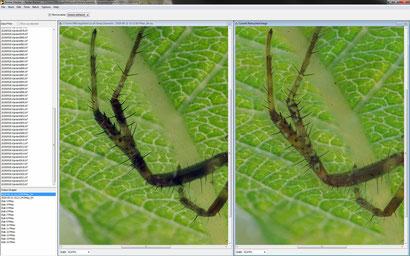 Falsche Schärfe: links das Ergebnis der ersten Methode PMAX (durchsichtige Beine), rechts das Er-gebnis der zweiten Mehode DMAP (Artefakte). Beides ist nicht befriedigend!