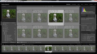 """LR: 37 Einzelbilder im Stapel gruppiert, die übrigen, unbrauchbaren Bilder als """"abgelehnt"""" markiert"""