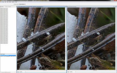 Zerene: Das Ergebnis von PMAX als Quelle links, das Ergebnis von DMAP als zu retuschierendes Bild rechts.