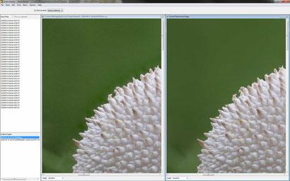 """Zerene: Im selben Bild die Schwächen von PMAX im linken Bild: verstärktes Bildrauschen in der grünen Hintergrundfläche sowie """"Halos"""" im Randbereich zur Pilzkante."""