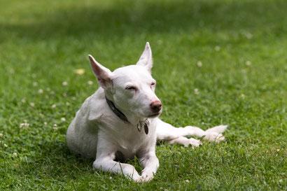 Auch für Hundesenioren ist Physiotherapie sinnvoll.