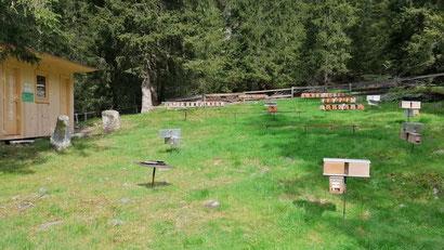 Inhaber der Belegstelle Mühldorfer Ochsenalm ist der Bezirksverband für Bienenzucht Spittal/Drau. IM Aschbacher Hansjürg aus Malta.