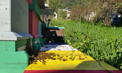 Bienen können in unterschiedlichen Arten von Bienenstöcken, auch Beuten oder Magazine genannt, gehalten werden. In Oberkärnten wird vorwiegend mit dem Kärntner Einheitsmaß, dem Flachzargensystem oder nach Zander geimkert.