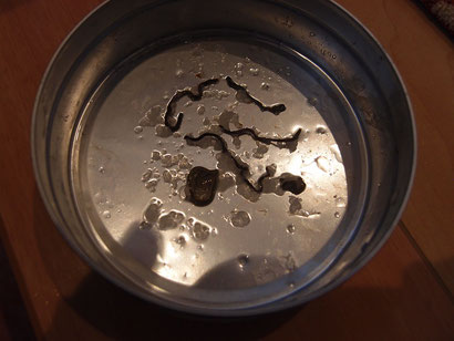 ニューギニアヤリガタリクウズムシとコウガイビルを塩にて駆除