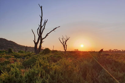 Sonnenaufgang im Samburu Reservat