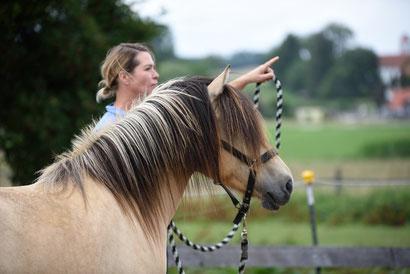Sharon Wilsie Kurs, Kirsti Ludwig, Pferdesprache, Sprachkurs Pferd, Horse Speak, Pferdekurs, Körpersprache