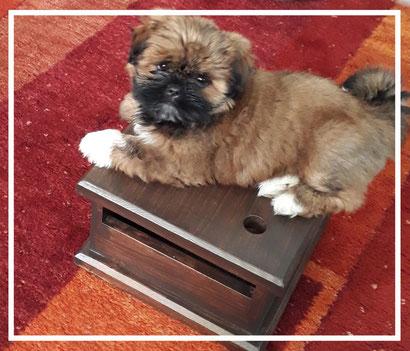 borstelen van Boomer en kammen van het hondje om vervilting te voorkomen