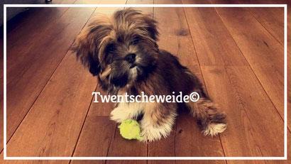 'Boomer hondje van geringe afmeting'