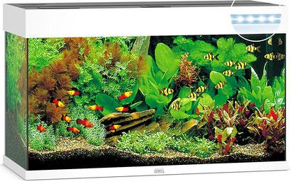 JUWEL Aquarium Rio 125 LED mit Unterschrank