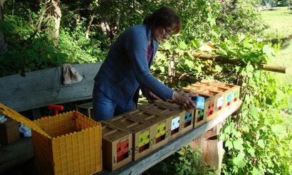 Als Büroleiterin der Kärntner Imkerschule ist auch begeisterte Züchterin