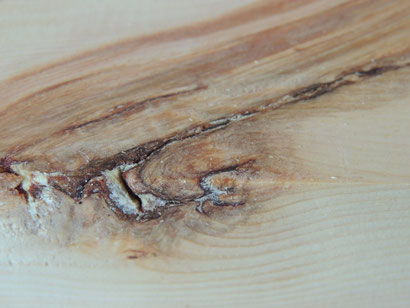 Zirbenholz mit schöner Maserung und Harzeinschlüssen Die Wohlfühlzirbe Zirbe Holz