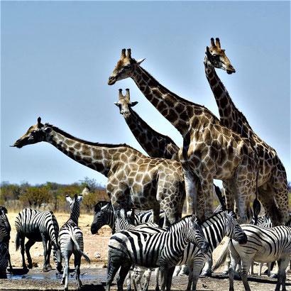 Südafrika Hluhluwe Imfolozi Park Eintritt Öffnungszeiten