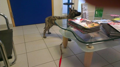 JJ beim Tierarzt