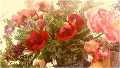 Jede einzelne Blume eine andere Methode und die Vase ist die Psycho-Kinesiologie