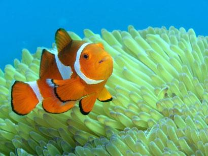 TAKU DIVE 石垣島の体験ダイビングページです。