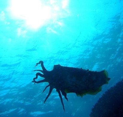 TAKU DIVE 石垣島の八重山の海の見所ページです。