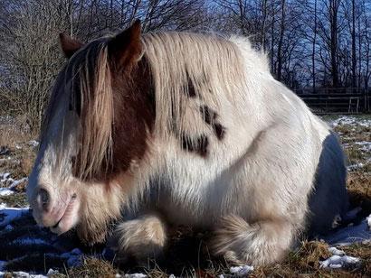 Pferd - Mobile Tierheilpraxis Alexandra Link Schleswig-Holstein
