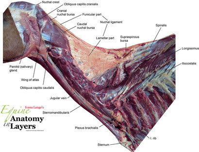 Pictures from Anatomy in Layers, with friendly allowance.