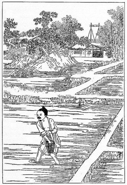 Culture du riz, d'après un dessin chinois (extrait du Keng-tche-tou). Les semailles dans la rizière couverte d'eau.