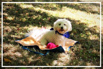 Hundedecke QSack von Univok