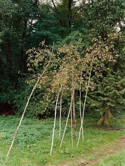 """Pfirsichbaum mit Stützen, Montagney"""", 2006"""