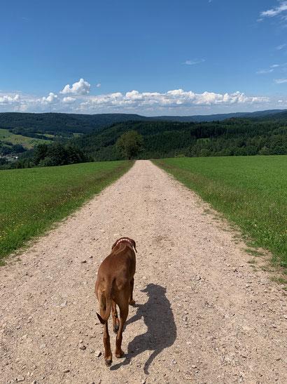 Traumhafter Panoramaweg zum Gasthof Lieberatsberg.