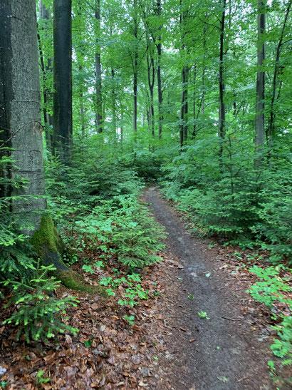 Pfad im Wald auf dem Vierburgenweg