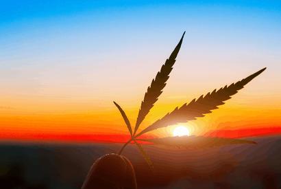 cannabis sorten wetter berücksichtigen