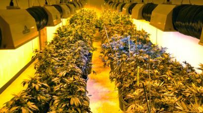 Raum Größe Growbox