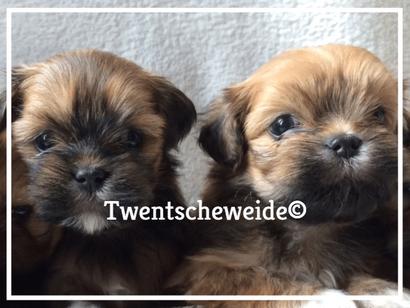 'twee mooie boomer pups informatie pagina'