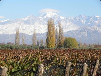 Weinberg, Weinrebe, Anden, Argentinien