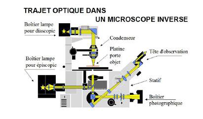 Claude Gonon Microscopie microscope inversé