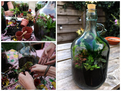 mini eco systeem maken, planten in fles maken