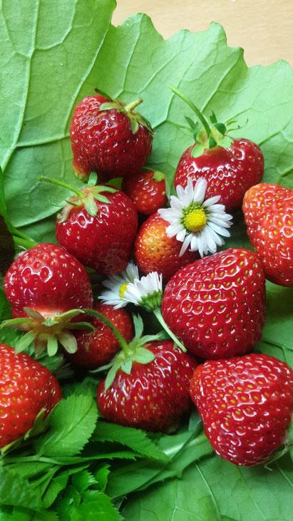 *juhu* Erdbeerzeit :)